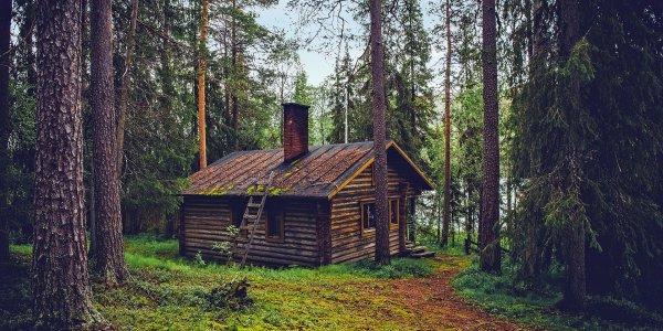Les Tree Houses, le nouveau concept de maisons durables